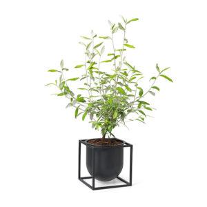 Kubus Flowerpot 14